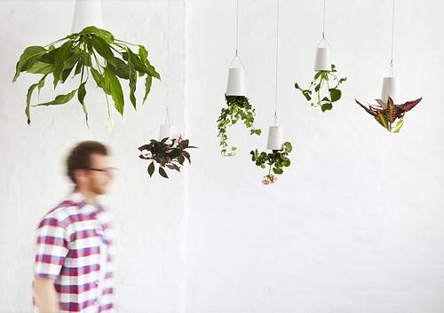 Planten omgekeerd